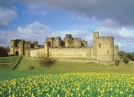 Alnwick Castle artist photo