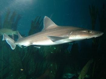National Marine Aquarium venue photo