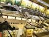 University of Aberdeen, Zoology Museum photo
