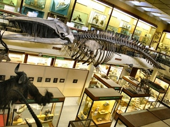 University of Aberdeen, Zoology Museum venue photo