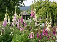 RHS Garden Rosemoor artist photo