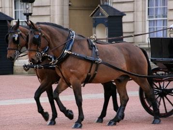 The Royal Mews @ Buckingham Palace venue photo