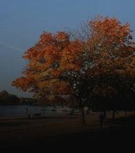 Hyde Park artist photo