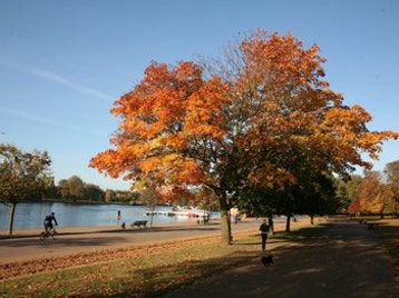 Hyde Park picture