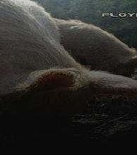 Floyd 2 artist photo