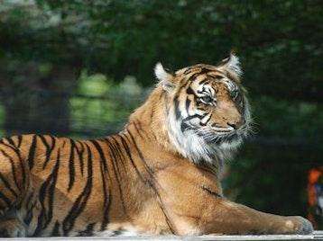 London Zoo venue photo