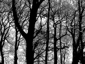 Treelines By Jenny Graham: Jenny Graham picture