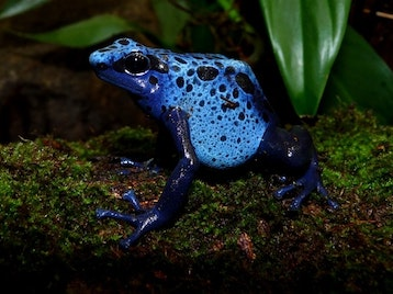 New Amphibians Exhibit At  London Zoo picture