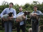 Sheeps artist photo