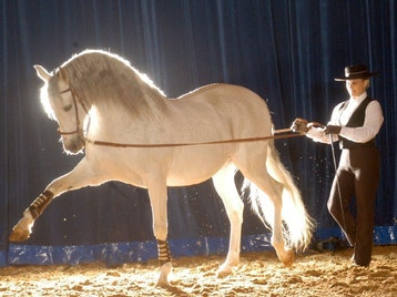 Spirit of the Horse artist photo