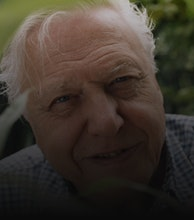 Sir David Attenborough artist photo