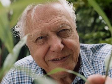 Sir David Attenborough artist photo