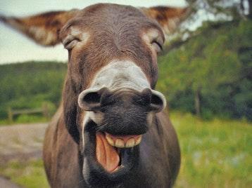 Lol Comedy Night: Billy Kirkwood, Julia Sutherland, Patrick Rolink, Gary Meikle, John Park picture