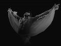 Jason Dale as Elvis Presley & The Sweet Temptations: Jason Dale is Elvis event picture