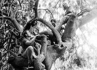 Elephant Tree artist photo