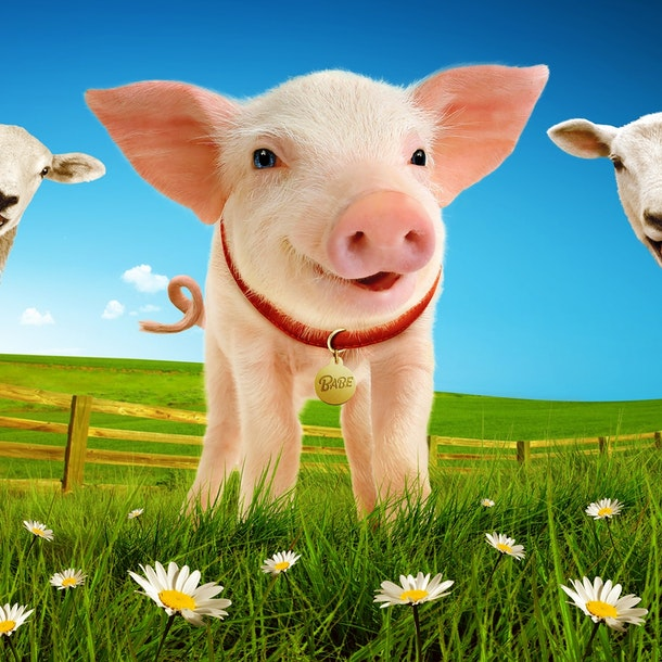 Babe The Sheep Pig Tour Dates
