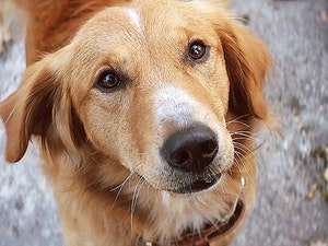 Film promo picture: A Dog's Purpose