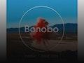 Bonobo event picture