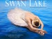 Swan Lake: Vienna Festival Ballet event picture