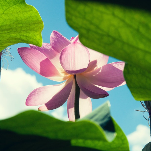 Yoga & Meditation Practice